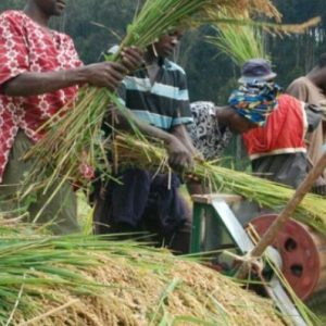 Imo State Government Poised to Enable Rice Farmers
