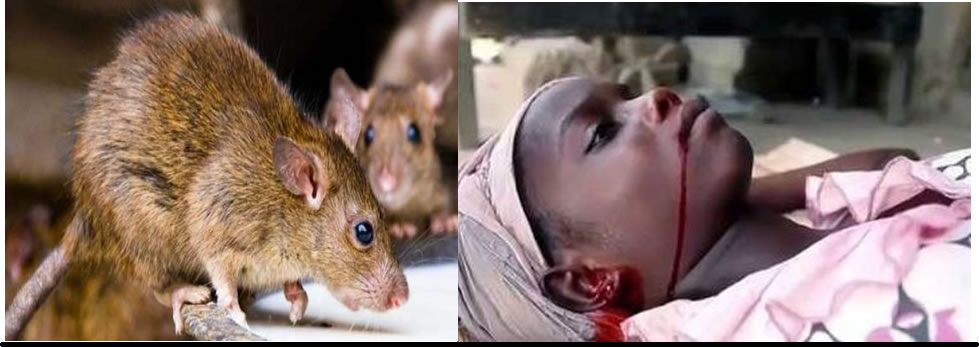 Be careful: there's an outbreak of Lassa fever in Nigeria